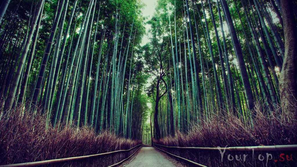 "Бамбуковый лес ""Сагано"" (фото 2)"