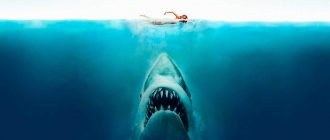 ТОП лучших фильмов про акул