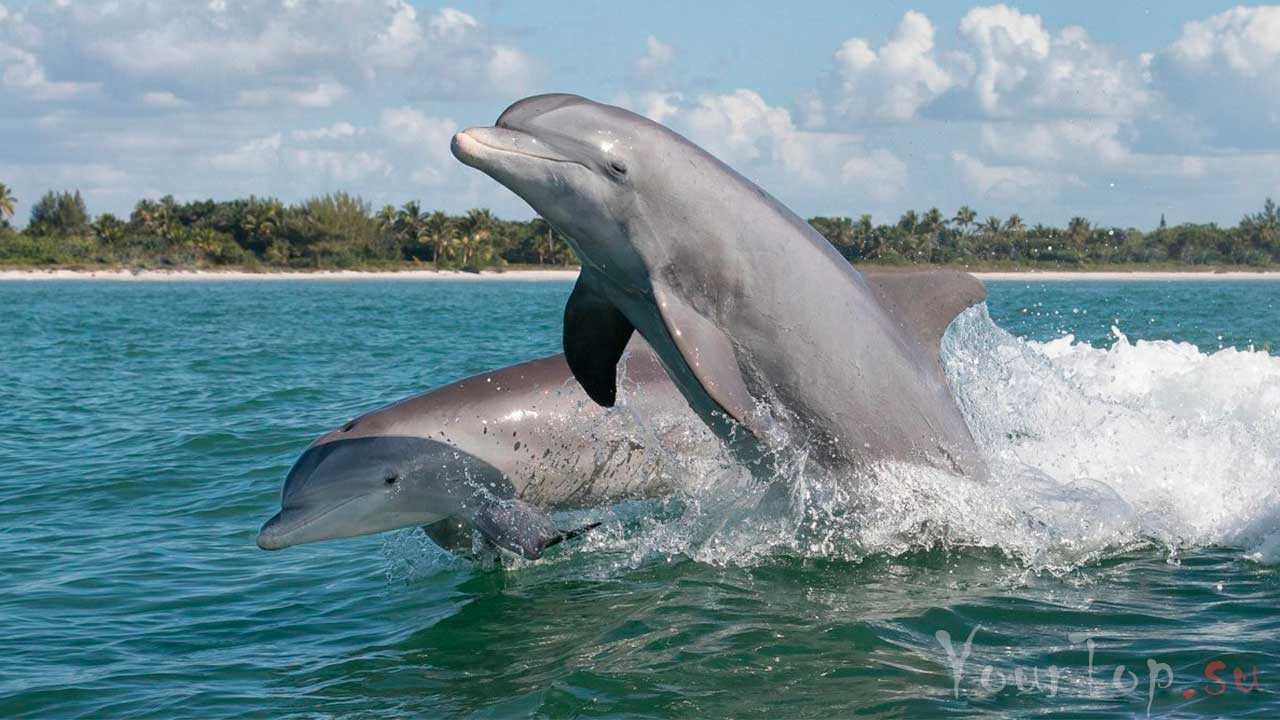 Дельфины занимают второе место по интеллекту в нашем списке