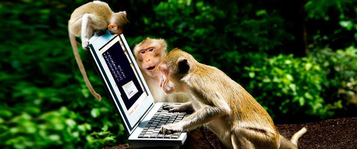ТОП 5 самых умных животных на планете