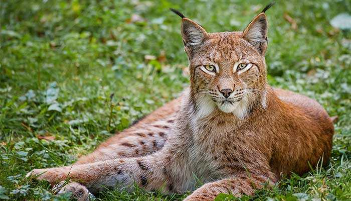 10 самых красивых животных планеты
