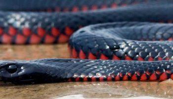 ТОП 5 самых опасных змей на планете